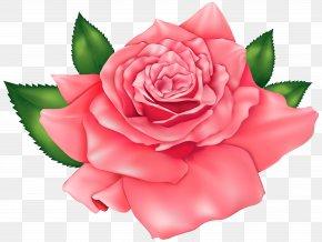 Pink Beautiful Rose Clipart Image - Rose Pink Clip Art PNG