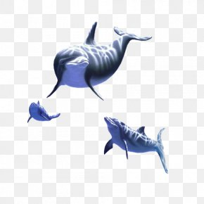 Environmental Album Design - Common Bottlenose Dolphin Tucuxi Animal Marine Mammal PNG