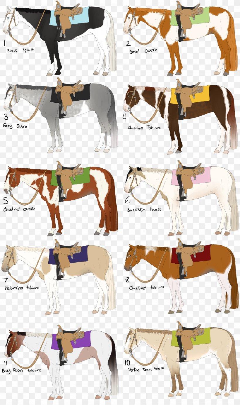 Mustang American Paint Horse Pony American Quarter Horse Overo Png 2100x3539px Mustang American Paint Horse American