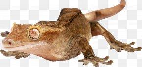 Lizard - Lizard Reptile PNG