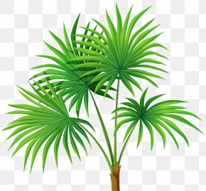 Palm Plant Transparent Clip Art - Washingtonia Robusta Arecaceae Clip Art PNG