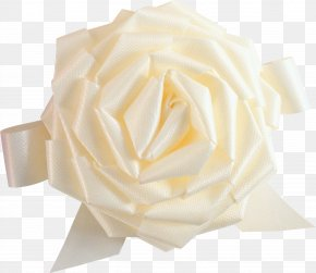 White Rose Image, Flower White Rose Picture PNG