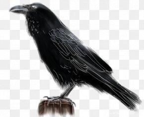 Bird - American Crow Rook New Caledonian Crow Bird Common Raven PNG
