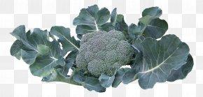 A Broccoli - Broccoli Collard Greens Vegetable PNG