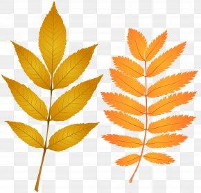 Fall Leaves Clip Art Image - Autumn Leaf Color Clip Art PNG