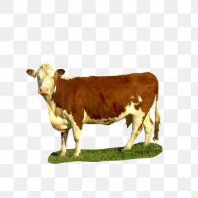Goat - Dairy Cattle Texas Longhorn Beef Cattle Calf Goat PNG