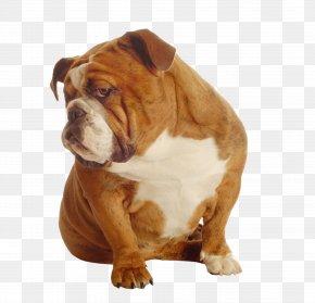 Shar Pei - Poodle Cat Pet Dog Food Dog Toy PNG