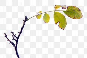 Leaf - Twig Leaf Computer Wallpaper PNG