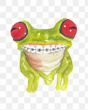 Green Tree Frog - Frog Cat Watercolor Painting Dental Braces PNG