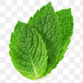 Mentha Spicata Peppermint Tea Water Mint Stock Photography PNG