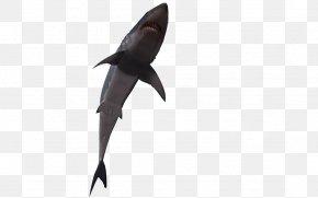 3d Cartoon Fish - Shark Fish 3D Computer Graphics PNG
