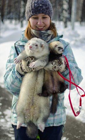 Ferret - Ferret Dog Cat Otter Leash PNG