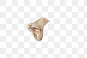 A High-definition Image Of Fresh Mushroom - Joint Beige PNG