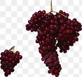 Red Grape Image - Red Wine Concord Grape Common Grape Vine PNG