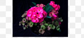 Design - Floral Design Pink M Flowering Plant RTV Pink PNG