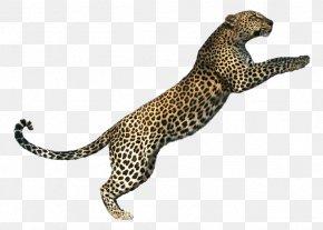 Leopard - Tiger Lion Jaguar Cheetah Cat PNG