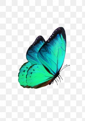 Fantasy Butterfly - Butterfly Transparency And Translucency Phengaris Alcon PNG