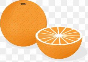 Fruit Orange Cliparts - Orange Juice Fruit Salad Clip Art PNG