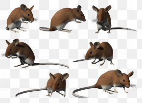 Computer Mouse - Computer Mouse Clip Art PNG