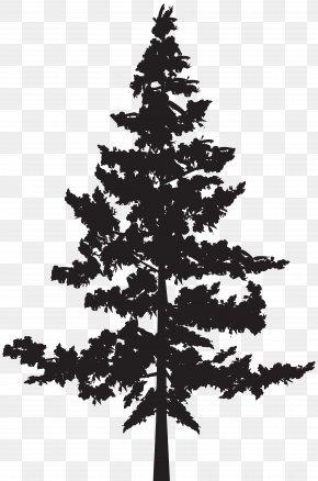 Tree Silhouette Clip Art Image - Black Pine Tree Pinus Contorta PNG
