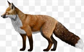 Fox - Red Fox Akita Horse Penguin Kairaly Road PNG