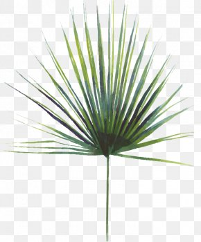 Monstera Leaf - Asian Palmyra Palm Swiss Cheese Plant Leaf Saw Palmetto Extract PNG