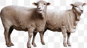 Goat - Goat Romney Sheep Dorset Horn Cattle PNG