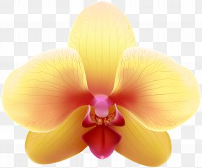 Transparent Yellow Orchid Clip Art Image - Yellow Orchids Clip Art PNG