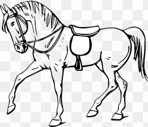 Free Horse Images - Tennessee Walking Horse Drawing Coloring Book Clip Art PNG