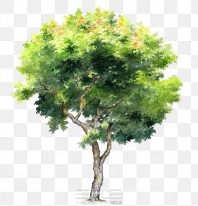 Hand-painted Trees - Tree PNG