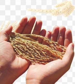 Wheat - Silo Wheat Food Grain Maize Cereal PNG