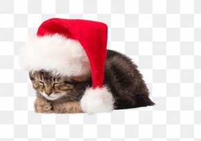 Free To Pull The Kitten Picture Material - Kitten Cat Santa Claus Puppy Christmas PNG