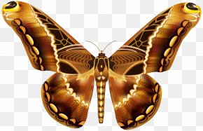 Beautiful Brown Butterfly Clipart Image - Butterfly Brown Greta Oto Clip Art PNG