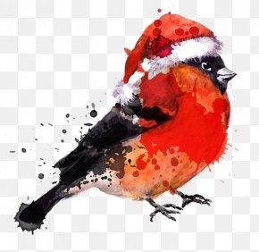 Bird - Bird Watercolor Painting Drawing PNG