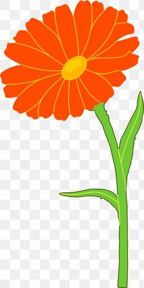 Marigold - Mexican Marigold Calendula Officinalis Flower Clip Art PNG