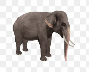 Elephant - Zoo Tycoon 2: Marine Mania Wildlife Park Elephant PNG