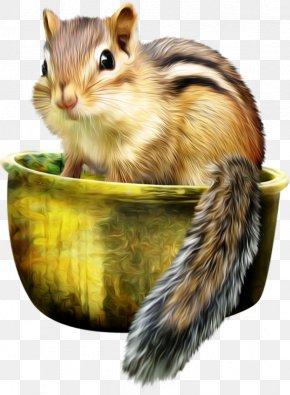 Squirrel - Fox Squirrel Eastern Chipmunk Siberian Chipmunk Least Chipmunk PNG