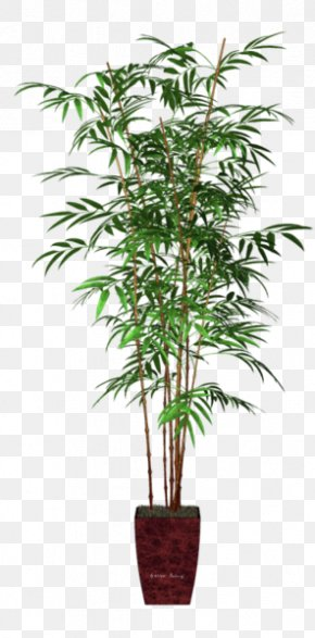 Bamboo - Areca Palm Houseplant Flowerpot Bamboo Veitchia PNG