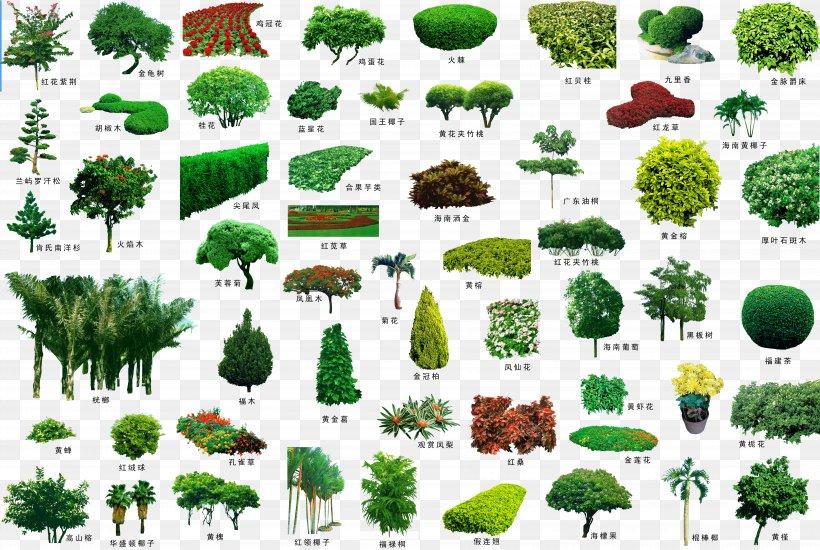 Tree Garden Landscape Plant Shrub, PNG, 7176x4819px, Shrub, Architecture, Biome, Conifer, Ecosystem Download Free