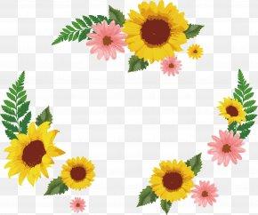 Sunflower Daisy Decorative Box - Common Sunflower Euclidean Vector Icon PNG