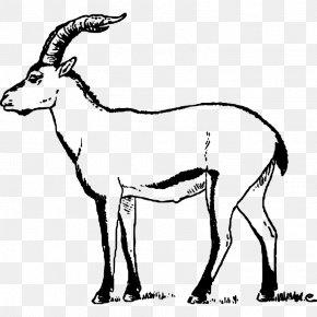 Goat - Iberian Peninsula Pyrenean Ibex Goat Portuguese Ibex Extinction PNG