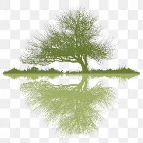 Boughs - Arborist Tree Planting Logo Arboriculture PNG