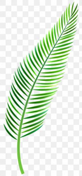 Palm Leaf Clip Art - Clip Art Leaf Palm Trees Image PNG