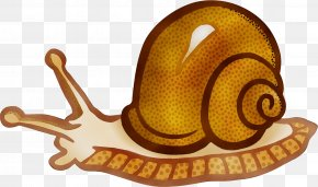 Molluscs Sea Snail - Snail Cartoon PNG
