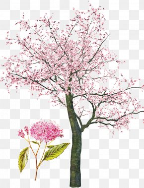 Pink Cherry Tree - Tree Spring Clip Art PNG