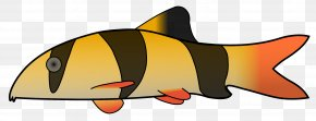 Fish - Harlequin Evil Clown Clip Art PNG