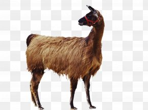 Black Goat - Goat Llama Alpaca Icon PNG