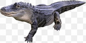 Alligator Transparent Image - Alligator Crocodile PNG