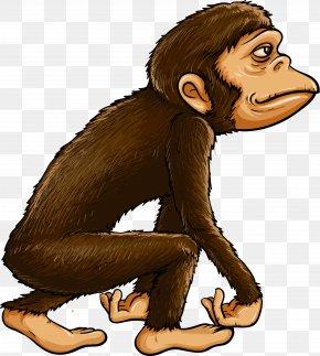 Evolution - Chimpanzee Ape Primate Monkey PNG