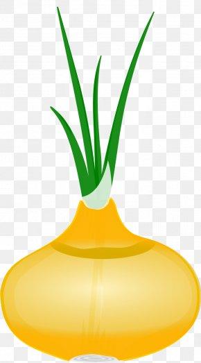 Onion - Hot Pot Onion PNG
